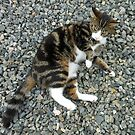 Pretty Kitty by BlueMoonRose
