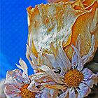 Dry Flower 2 by Chet  King