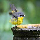 Happy Bird Bathing by byronbackyard