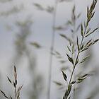 natural grass 3 by vigor
