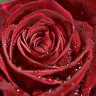 Deep Red Rose by Gene Praag