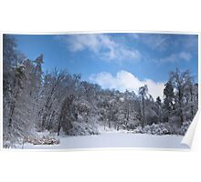 Forest after Ice Storm Poster