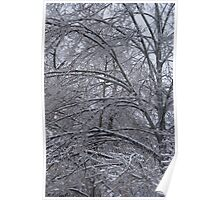 Branches of Icy Tree Poster