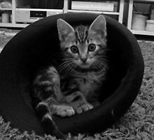 Cat In The Hat by spoilmesweetie
