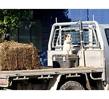 Small Farm Dog Sitting on Tool Box Looking Cute Photographic Print
