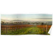 Morning View - Yarra Valley  Poster