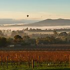 Morning View - Yarra Valley by Timo Balk