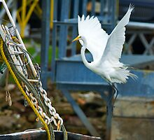Great White Egret follows Shrimp Boat by imagetj