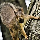 The Playful Squirrel by Brian Gaynor