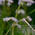 Unwanted Flowers by Carolyn Clark