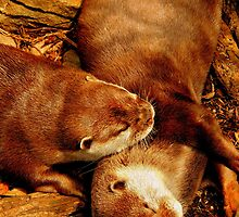Snuggling Otters by Barnbk02