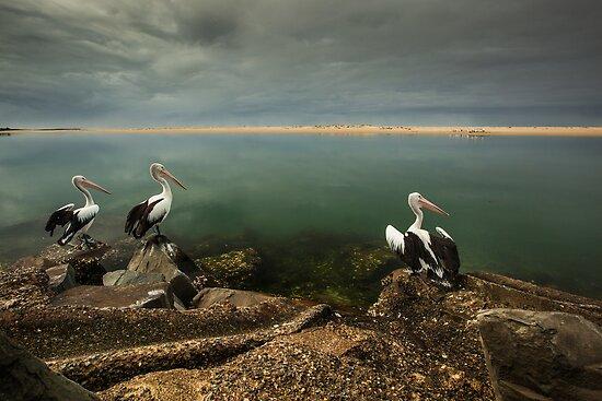 Australian pelicans sunbathing by Gabor Pozsgai