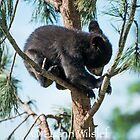 Tree Climbing by Luann wilslef