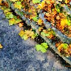 Autumn Jigsaw by RC deWinter