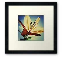 Sun Seeking Lily Framed Print