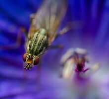 The Beauty of Bugs and Nature by LucyOlver