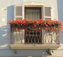 The Geranium Window by Alexandra Lavizzari