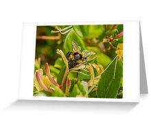 Bumble bee on honeysuckle again Greeting Card
