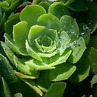 Dewy Green Morning by MissRisa