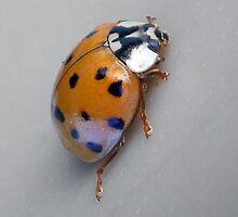 ©NS Beetle  Macro IA by OmarHernandez