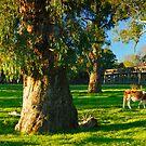 Gundagai Trestle Bridge, New South Wales, Australia by Michael Boniwell