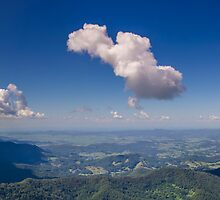 Springbrook National Park, Queensland Australia by Ann Pinnock
