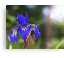 Iris With Lens Flare Canvas Print