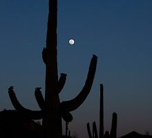 Saguaro Sleeping by Bryan Shane