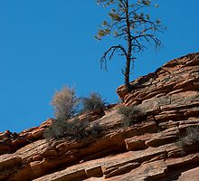 The Lonesome Pine by Bryan Shane