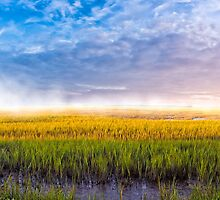 Lazaretto Marsh Panorama - Georgia Coastal Landscape by Mark Tisdale