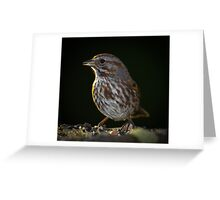 Song Sparrow Greeting Card