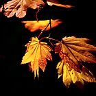 Leaves of Gold by Dave  Knowles
