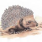 Hedgehog by shiro