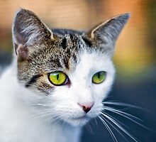 A green eyed Cat  by Dave  Knowles