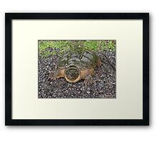 Don't snap my head off! Framed Print