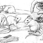 Rattus Lab by Brendan Coyle
