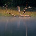 Driftwood on Norris Lake by photodug