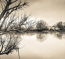 The Glebe by Noeline R