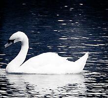 Swan by DanButlerPhoto