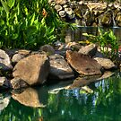 THE LITTLE ROCK POND by imagetj