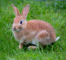 Bunny by Dave Hare