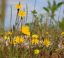 Seaside flora by Dave Hare