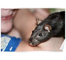 Ratling and Sassy Poster