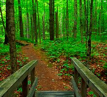 Forest Path by jswolfphoto