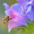Bee in the Garden by relayer51