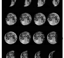 Phases of the Moon by Sarah Cox