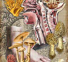 Fungi by Barbee Teasley