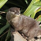 Otter by Atarial