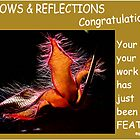 SUBMISSION FEATURE BANNER - SHADOWS & REFLECTIONS by Magaret Meintjes