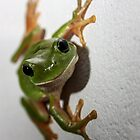 Green Tree Frog by SMCK